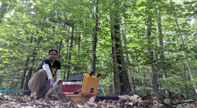 Adriana doing field work at Harvard Forest.
